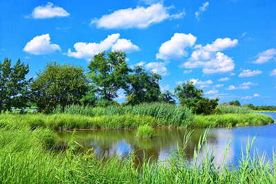NJ Meadowlands-Summer Beauty