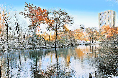 Winter Simplicity Central Park I