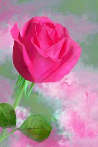 Pink Rose Art Portrait