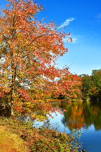 Fall Foliage and Reflections N.J.