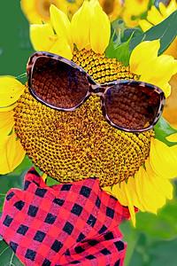 Sunflower Ambassador