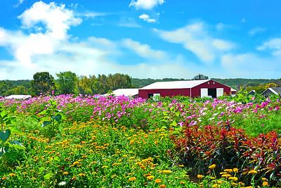 Farm Flower Garden, N.J.