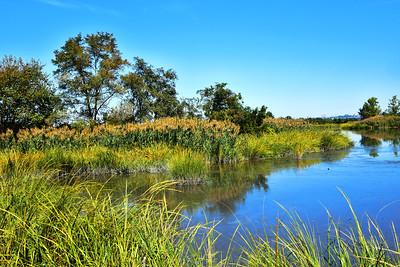 New Jersey Marshland Tranquility