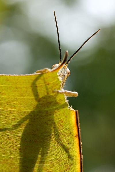 Grasshopper's lunchtime