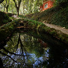 Small pond in a lush forest at the Pena Park in Sintra