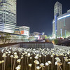 Sea of LED flowers