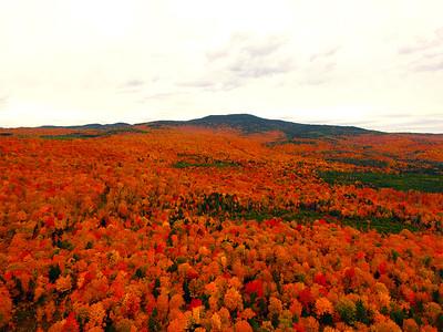 Deer Mountain Red's