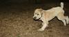 Hank (boy pup)_001