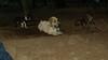 Hank (boy pup)_003