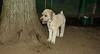 Hank (boy pup)_002
