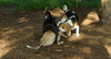 ella (puppy new), dixie, buster_002