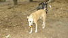 dixie (puppy), Ella (puppy) 001
