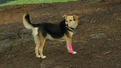 maddie; portrait ossining bandage