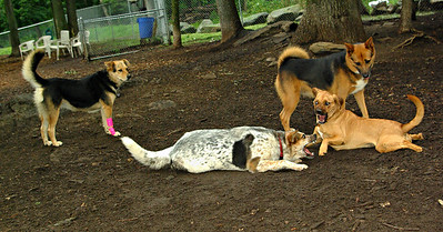 boo (puppy), trixie, lexi, maddie 001