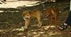 buxie (new puppy), Cleo (puppy) 005