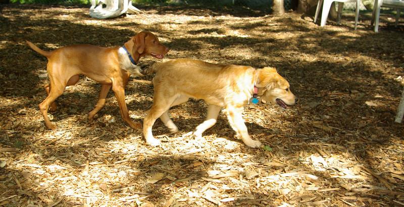 buxie (new puppy), Cleo (puppy) 002