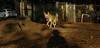 Asia (carolina dog)_008