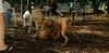 bentley ( new puppy) 004