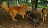 dakota (gr), artimis (puppy), lexi 001
