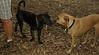 artimis (puppy), Marley (i) 001