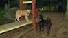 buxy, louie, artimis (puppy)_002