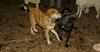 buxy (puppy girl), artimis (puppy)_001