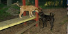 buxy, louie, artimis (puppy)_001