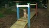 Buxy (new puppy girl)_004