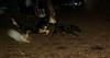faith (terrier), Maddie_001