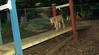 Buxy (new puppy girl)_002