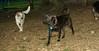 artimis (puppy)_001