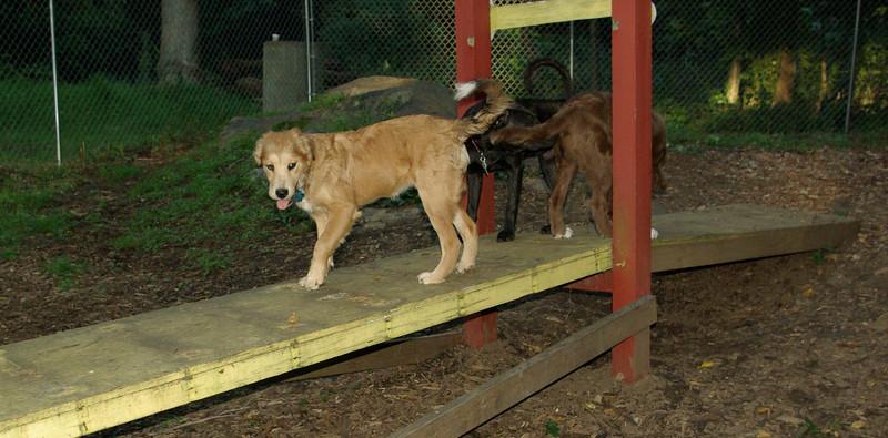 buxy, louie, artimis (puppy)_003