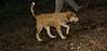 Buxy (new puppy girl)_001
