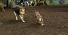 nicki (puppy), maddie_001