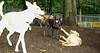artimis (puppy)_004