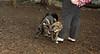 nicky (puppy), Artimis (puppy)_001
