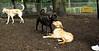 artimis (puppy)_003