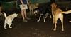 roxie, leila, buffy, divot_003