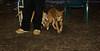 Stack (new pup 4mo)_002