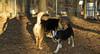Buddy (new puppy), Maddie ( park mom)_002