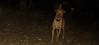 Doug (pup boy)_001