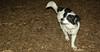 Rudy (new puppy, joe,  jack)_003