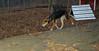 Tucker (rescue boy 7 months)_005