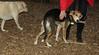 Tucker (rescue boy 7 months)_006