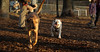 BUDDY (young bulldog)_00003