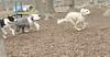 aaron's, sheepdog, riley_00001