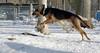 DANNY (hound)_00001