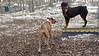 Cassie (new), Jackie (former puppy)_00003