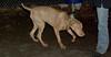 Kenzie ( 1st time puppy boy)_00001