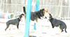puppy pair, maddie_00002
